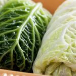 Close-up of three stuffed cabbage leaves