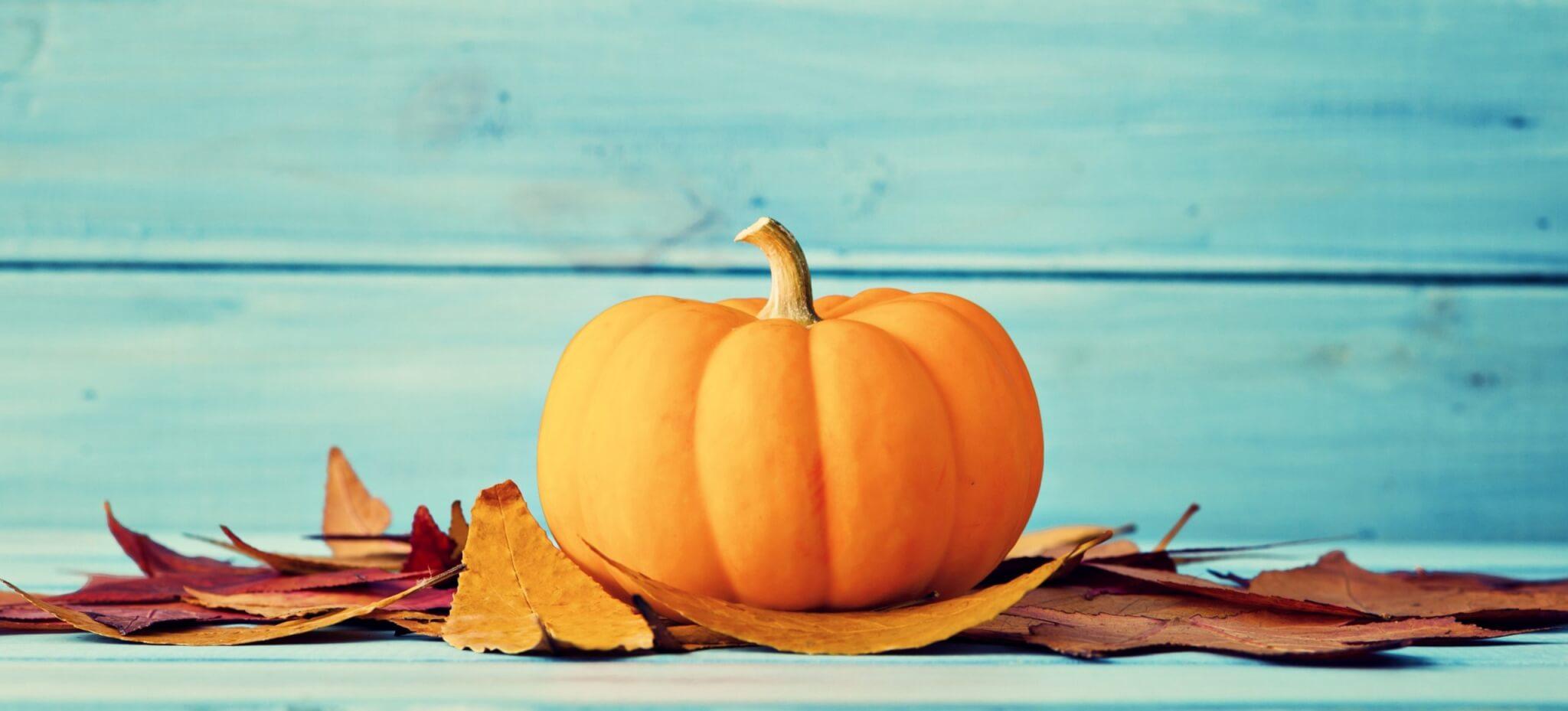 großer Zierkürbis mit Herbstblättern vor türkisfarbenem Hintergrund