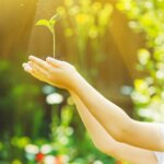 Kleines Mädchen, das junge grüne Pflanzen im Sonnenlicht hält.